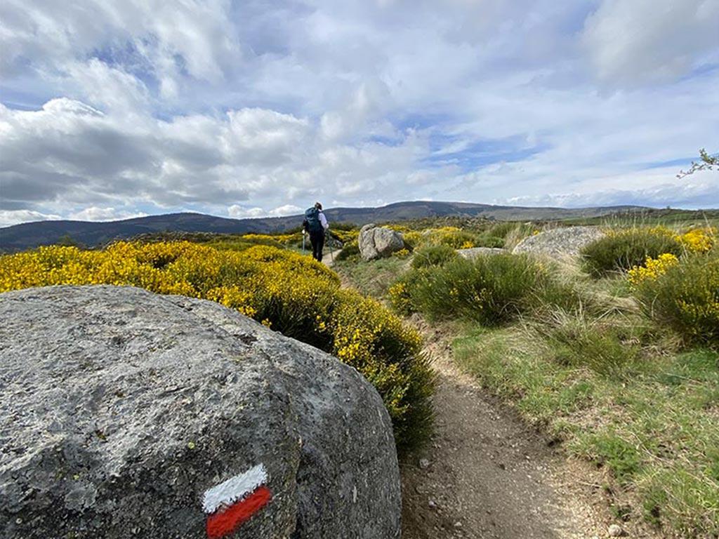 Le Chemin de Stevenson : randonnée sur le GR70